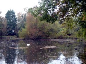 Kearsney Manor lake created by the erection of Kearsney Mill in 1811. AS 2016