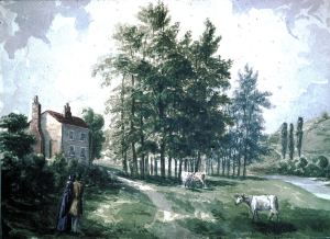 Bushy Ruff by S J Mackie c 1842. Dover Museum