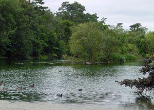 Bushy Ruff Lake