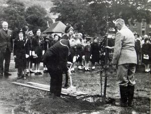 Mayor Arthur Husk planting trees to commemorate the Girls' Life Brigade Centenary 1962. Dover Library