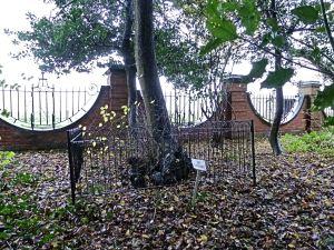 Lone Tree 2013