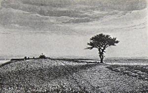 Lone Tree c 1904