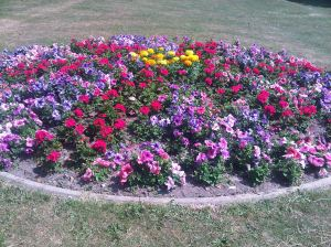 Connaught Park flower bed, planted by C PAG, in bloom. Colette Boland  2013
