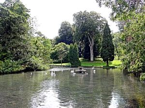 Kearsney Abbey lake, fountain and swans. Alan Sencicle