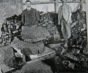 Shakespeare Colliery coal together with iron baring rocks. Tom Robinson Collection