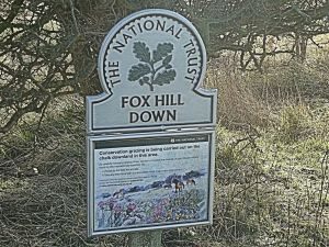 Fox Hill Down east of the Castle and, these days, owned and conserved by the National Trust. LS