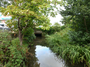 Dour looking up stream at the north parapet of the Bridge Street bridge Charlton Green. AS