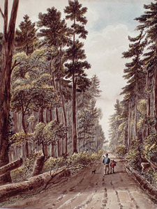 Road between Kingston and York Town, Upper Canada by James Pattison Cockburn c1830. Wikimedia-commons