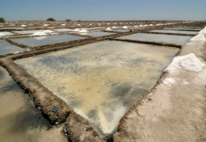 Salt pans in Marakkanam India by Sandip Dey 2012. The ones in the Turks and Caicos, part of the Bahamas in Cockburn's time. Wikimedia-Commons