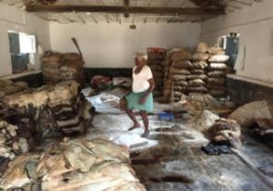 Tannery Worker kneading soaked skins, Tannery Road,Bangalore 2016 WestCoastMuskateer Wikimedia