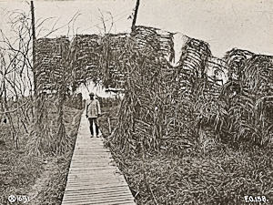 Camouflage woods creating irregular lines of overhanging trees across frequently used boardwalks to the Front. United State National Archives